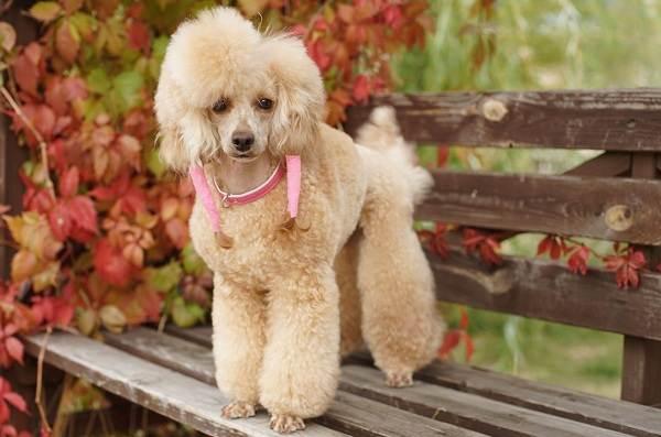 Средние-породы-собак-Описания-особенности-названия-и-виды -средних-пород-собак-3
