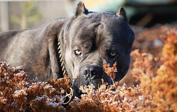 Средние-породы-собак-Описания-особенности-названия-и-виды -средних-пород-собак-22