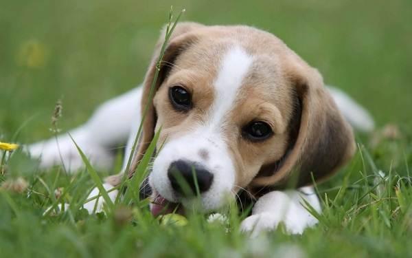 Средние-породы-собак-Описания-особенности-названия-и-виды -средних-пород-собак-50