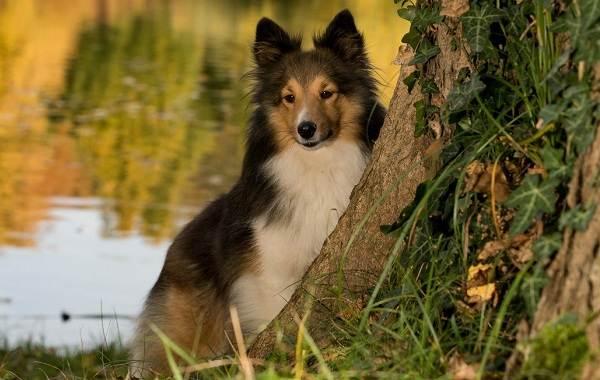 Средние-породы-собак-Описания-особенности-названия-и-виды -средних-пород-собак-48