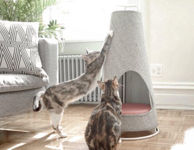 Средства для лучшего приучения кошки к когтеточке