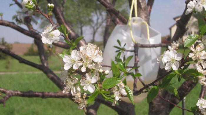 средства от плодожорки яблоневой