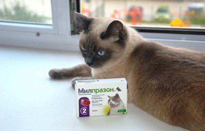 Средство Милпразон защита кошки от глистов