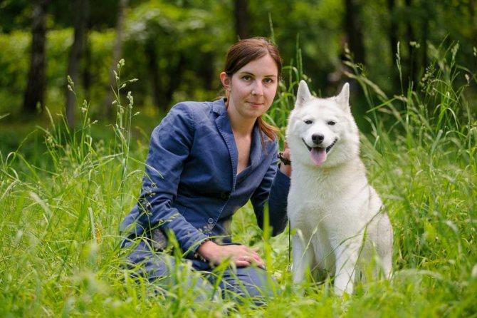 Стандарты породы Сибирский Хаски - характер