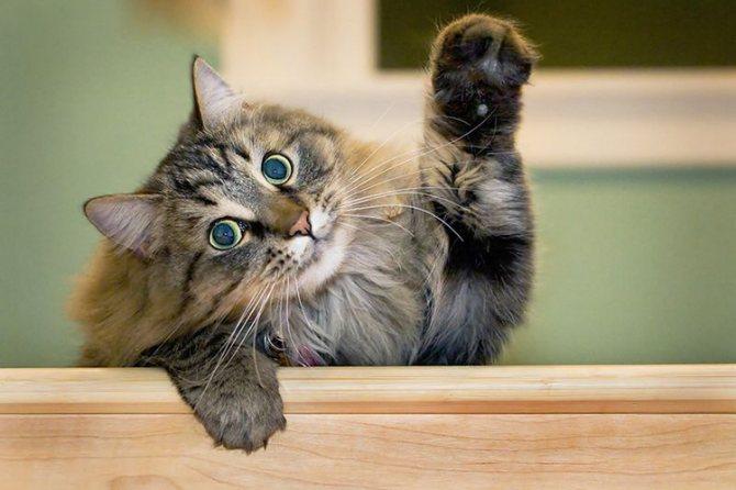 Старение кошек