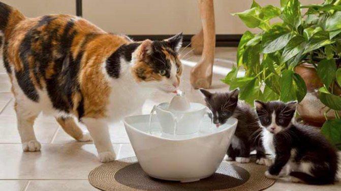 Старые коты много пьют воды