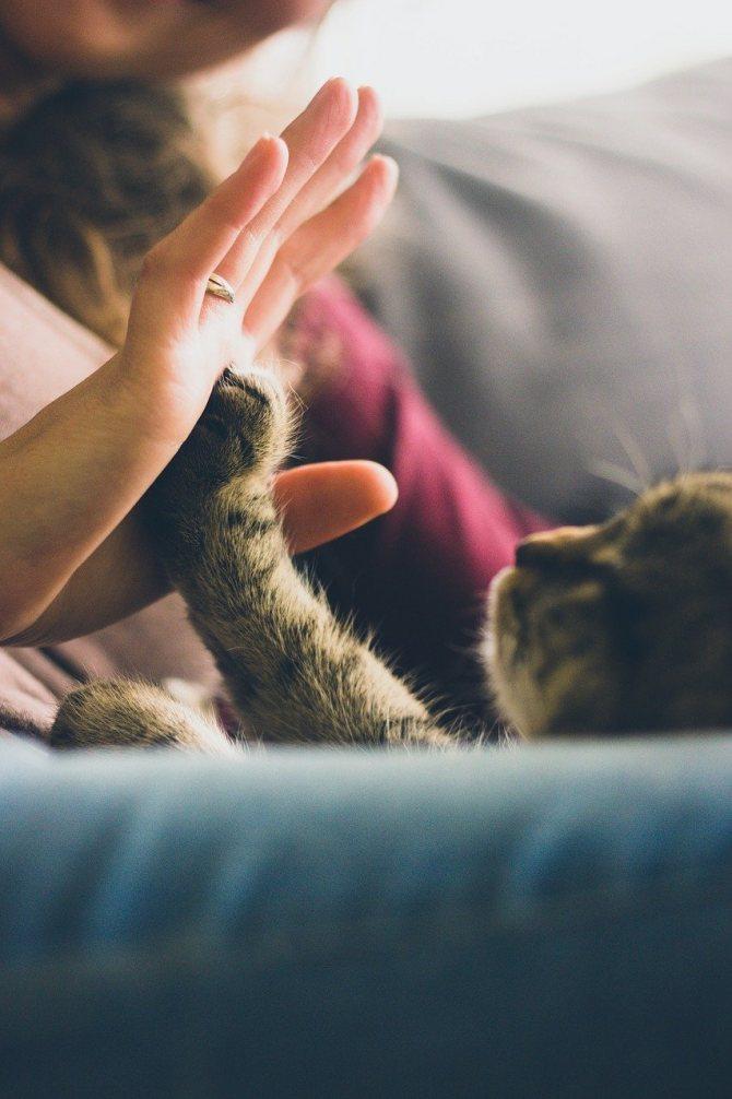 Стерилизация кошек в домашних условиях.