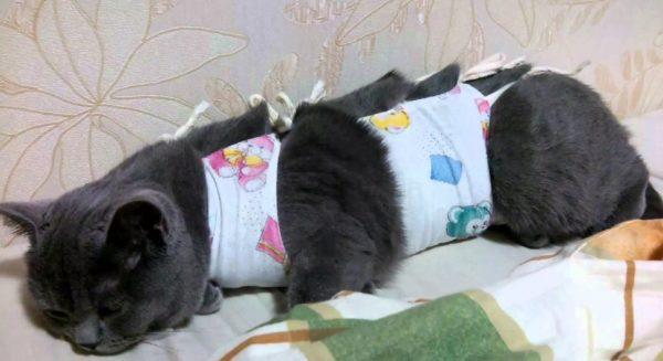 Стерилизация кошки — кардинальный метод решения проблемы