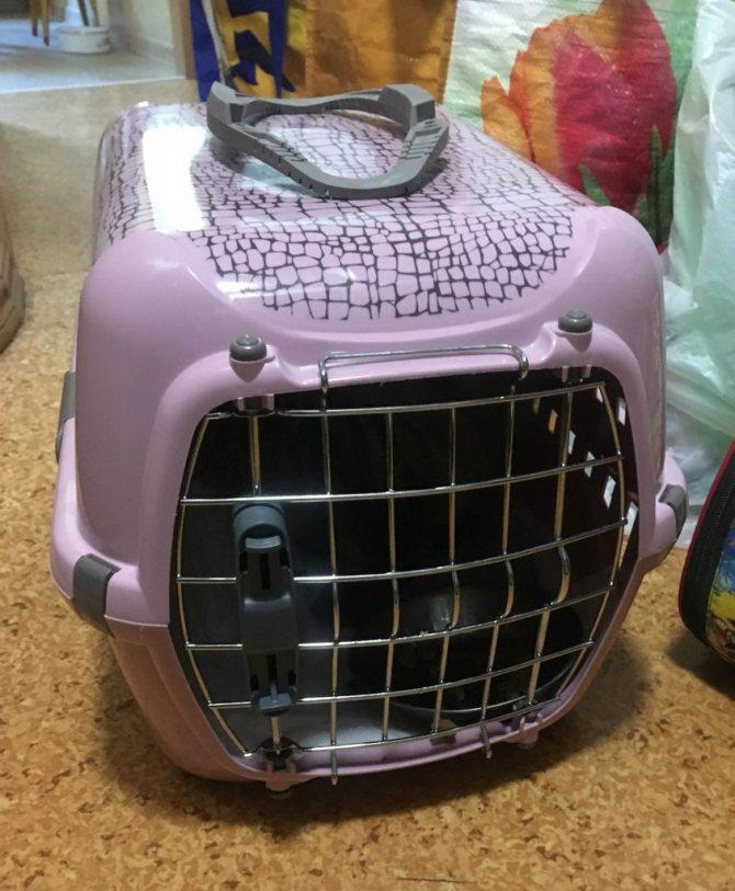 Стерилизация кошки: уход после операции, выход из наркоза, обработка и защита швов, сроки восстановления