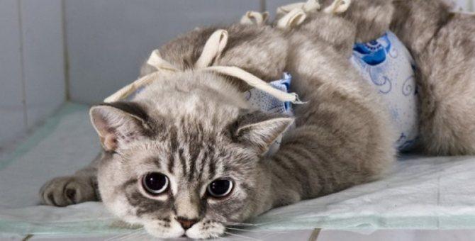 Стерилизация верное решение, если организм животного не в состоянии выносить потомство