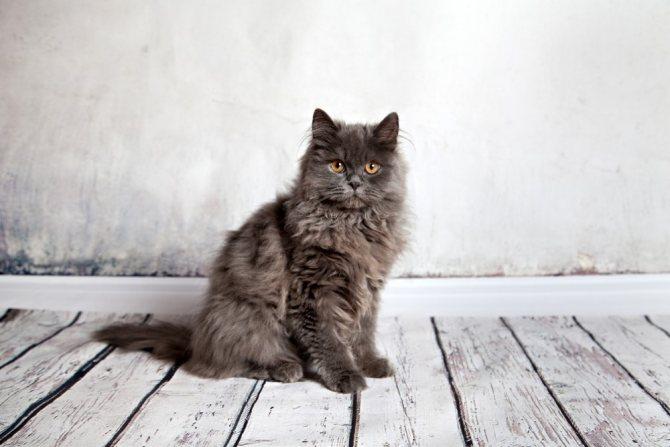 Стоит ли заводить кошку - плюсы и минусы животного