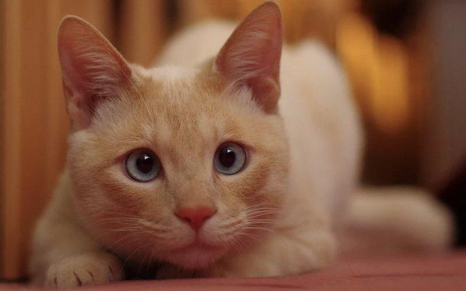 Стоморджил для кошек: инструкция по применению, состав, дозировка и цена