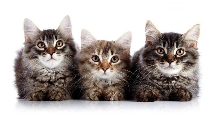 стоп стресс для кошек отзывы ветеринаров