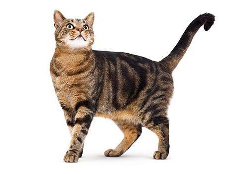 стоп стресс для кошек отзывы