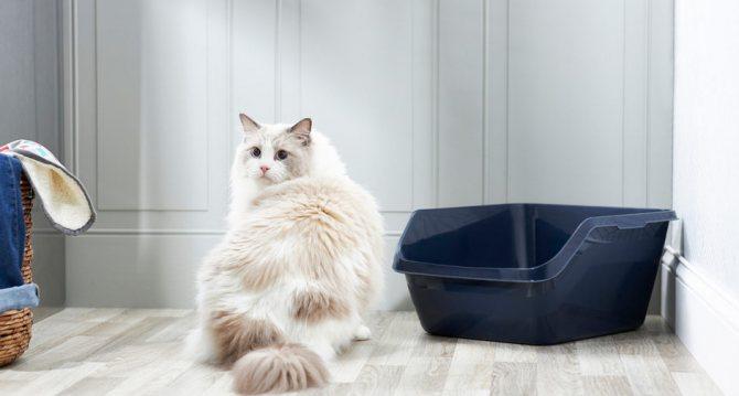 Стресс при приучении кошки к лотку