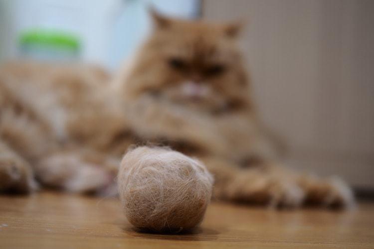 Стрижка колтунов у кошки
