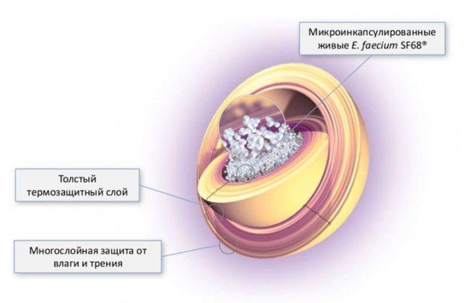Строение гранулы Фортифлоры