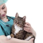 Струвиты в моче у кота как лечить