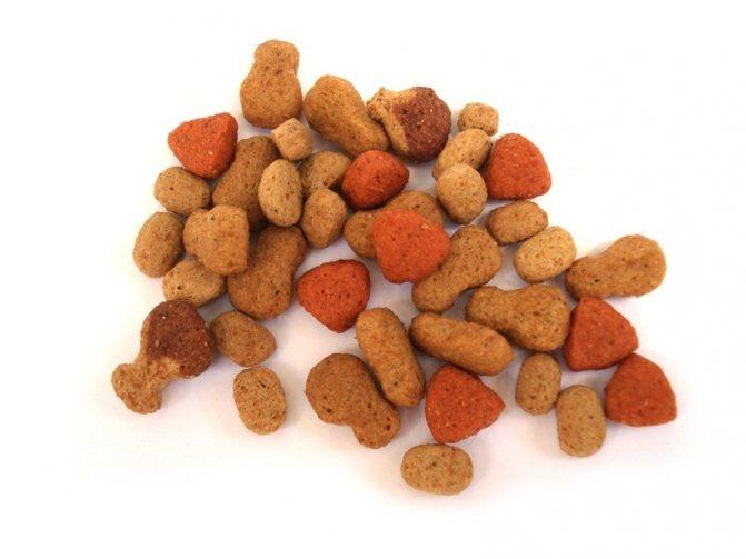 Сухие корма для кошачьих должны в обязательном порядке содержать углеводы, белки, жиры и растительную клетчатку