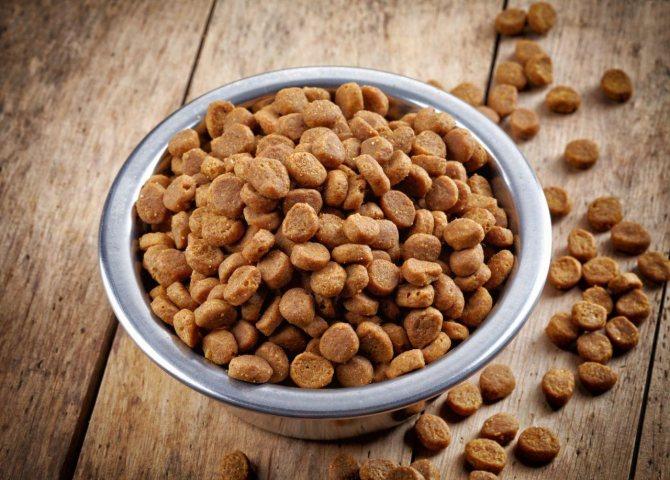 Сухой корм полезен для ротовой полости кошачьих в плане очищения зубов