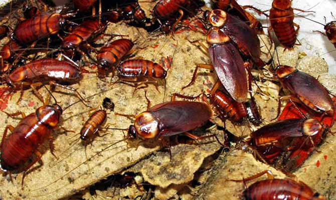 Существует много легенд про тараканов