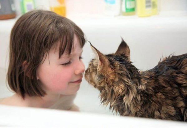 Существуют кошки, которые часами могут играть в воде