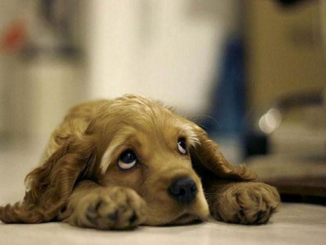 Суспензионные лекарства пес может выплюнуть