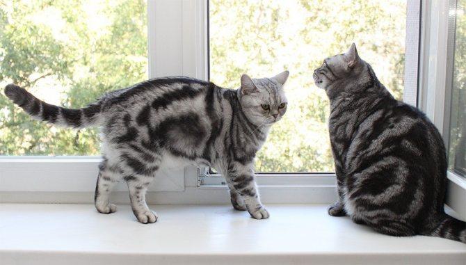 Своенравные животные уживутся вместе гораздо быстрее, если создать индивидуально для каждой кошечки зону отдыха, кормления и туалета