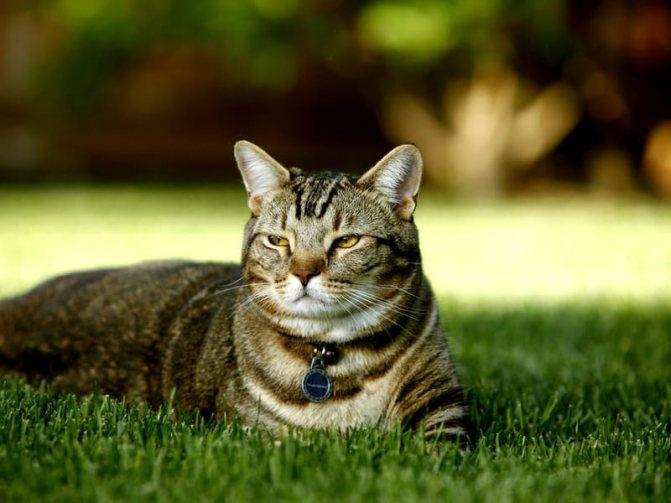 Таблетка от блох и глистов для кошек