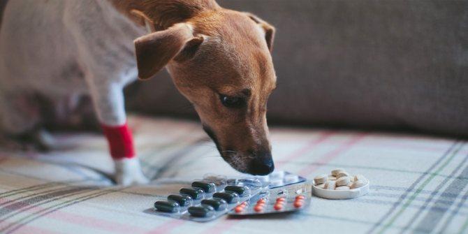Таблетки для дегельминтизации