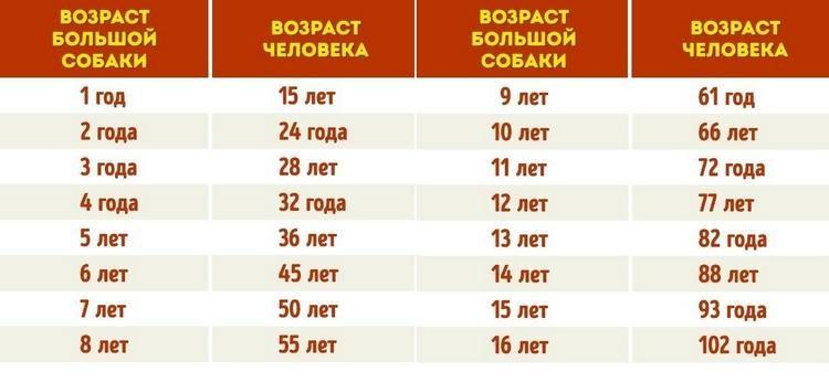Таблица сравнивает возраст человека и то, сколько живут большие собаки.