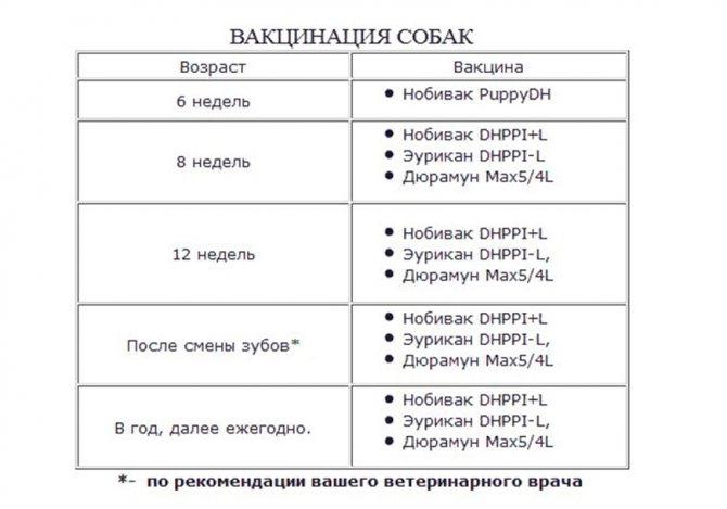 Таблица сроков вакцинации йорка
