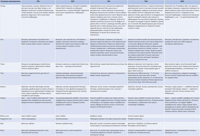 Таблица типы русской голубой кошки