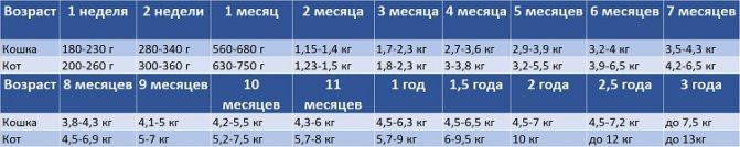 Таблица веса мейн-куны