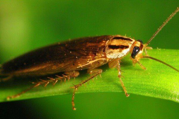 Таракан на листе