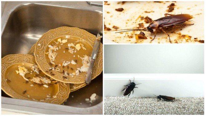 Тараканы без еды