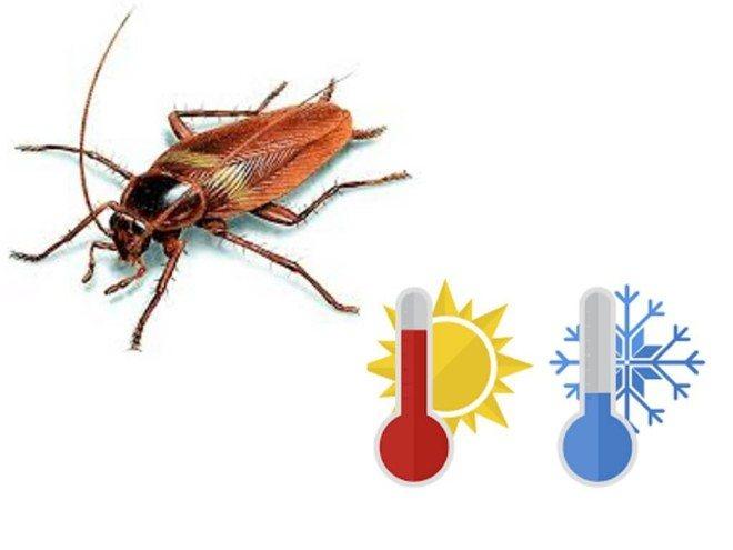 Тараканы холод и жара