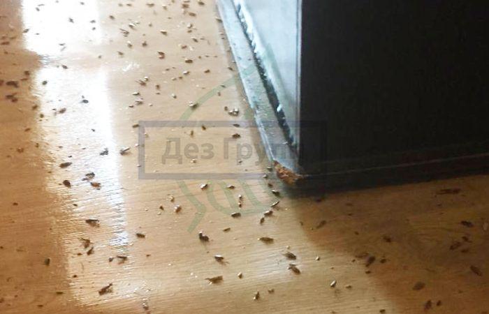 тараканы лезут от соседей