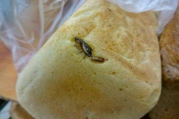 Тараканы могут быть принесены из магазина (на фото - таракан в хлебе)
