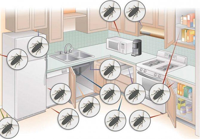 тараканы в доме где прячутся