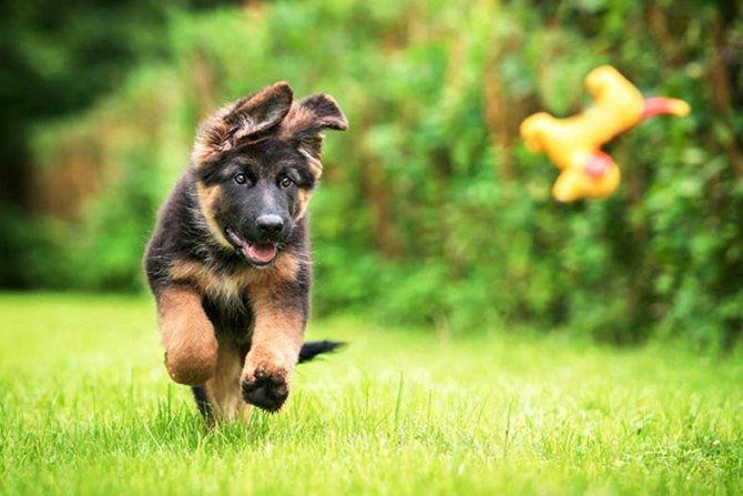 теория ЛеБо для расчета возраста собаки по человеческим меркам