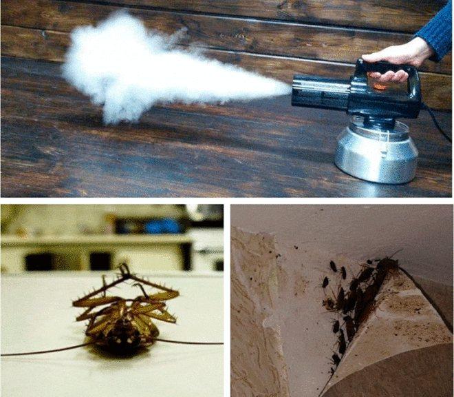 Тепловая обработка помещения от тараканов