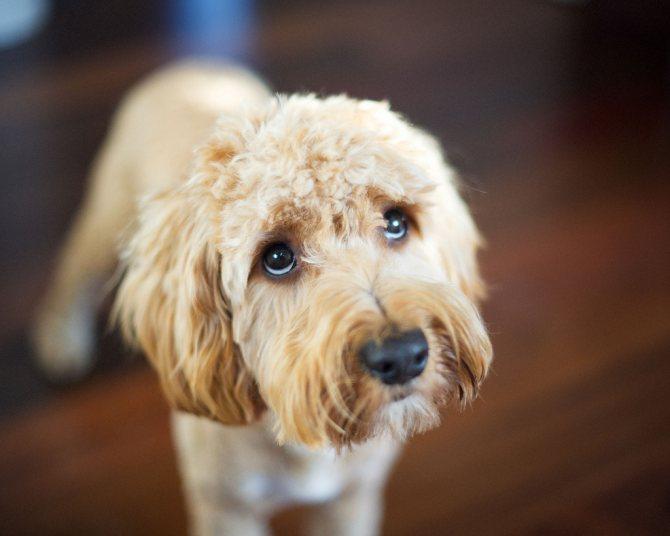 терапия при желтухе у собак