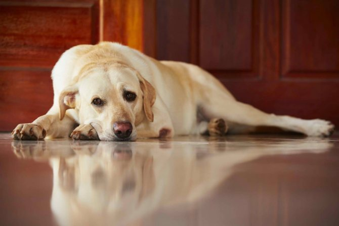 типология рвоты с кровью у собак
