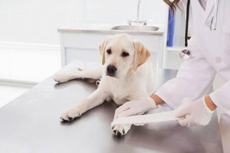 Только ветеринарный врач может поставить правильный диагноз