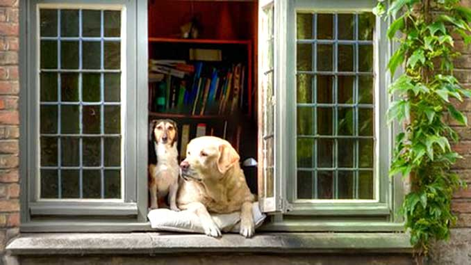 ТОП 30 лучших пород собак для квартиры