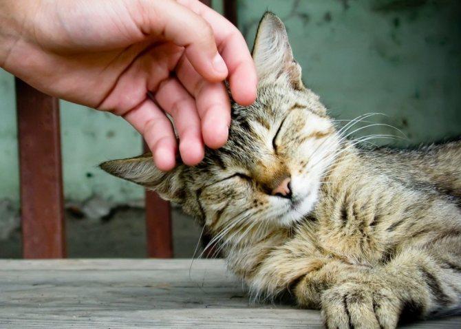Топ 9 признаков того, что кошка вас любит