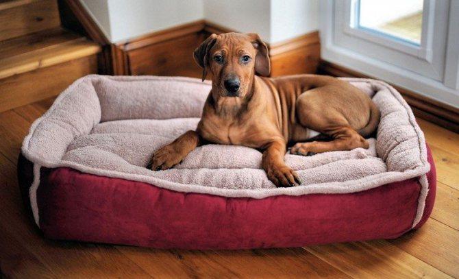 Травматический артрит у собаки лечение