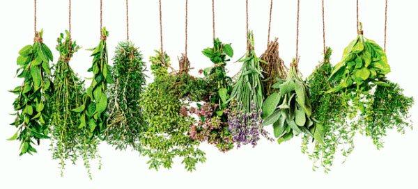 Травы от тараканов в доме