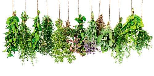 травы сушеные